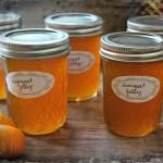 Sweet and Tart California Kumquat Jelly