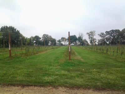 Farm 021