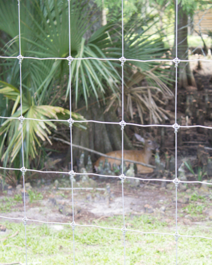 Orlando Vacation - Wild Florida - Wild Life Park - Deer - At Home With Zan