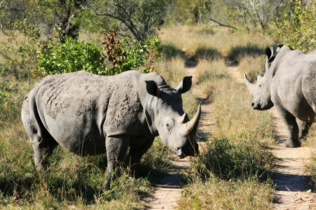 Rhino Roadblock