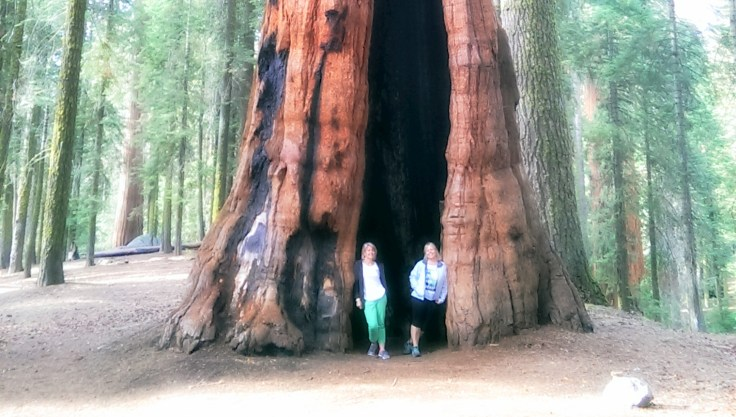Sequoia National Park Feature 2