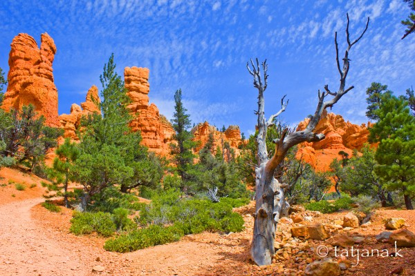Red-Canyon-1
