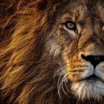 ראש אריה