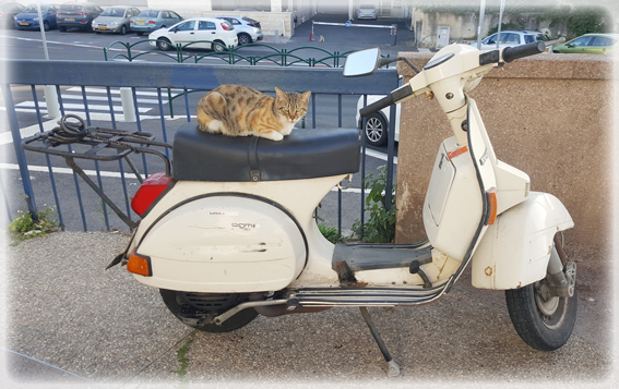 cat sitting on a Vespa