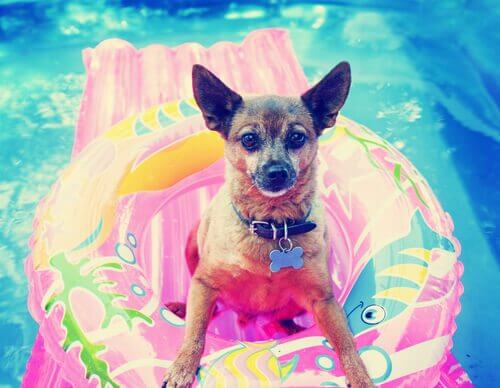 Enjoy these summer activities with your dog.