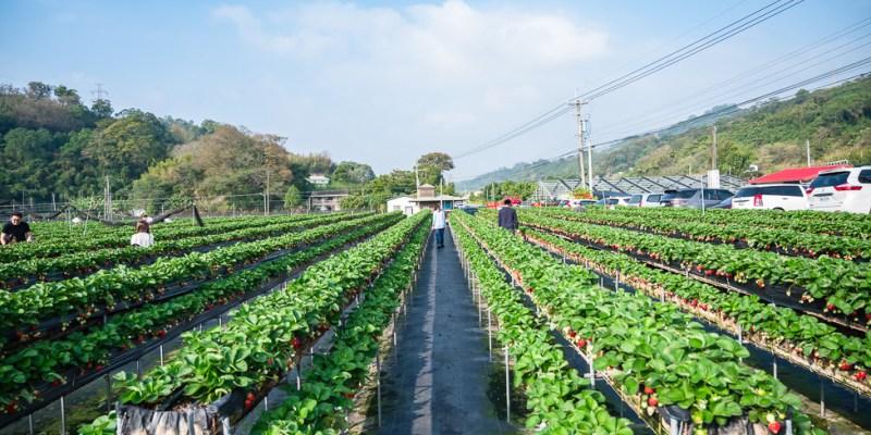 苗栗景點 如意高架牛奶草莓,馬拉邦山下如茶園般景色的草莓園,邊採草莓邊欣賞優美景色