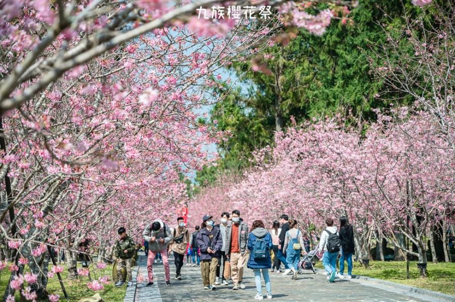  南投景點 2021九族櫻花祭,歷年難得一見4種品種5000棵櫻花齊綻放,讓你一秒來到日本