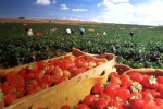 Romanii din Spania raman fara locuri de munca