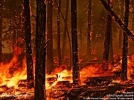 56 de militari au intervenit in Muntii Calimani si Muntii Bargaului pentru stingerea incendiilor de padure