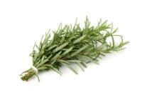 Rozmarinul, planta cu puteri vindecătoare