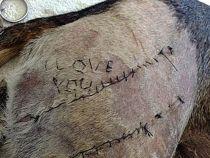 Mesaj de dragoste cusut pe pielea unui caine viu