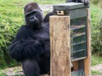 Maimutele de la gradina zoologica din Berlin primesc snacksuri de la automate