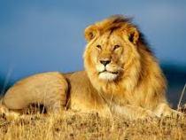 Un angajat al parcului natural Hluhluwe-Imfolozi din Africa de Sud a fost ucis de o leoaica