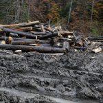 A devenit activ cel mai important sistem informațional integrat de urmărire a materialului lemnos – SUMAL 2.0