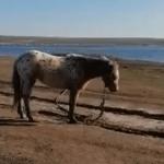 Proprietarul cailor lăsați să moară pe malul unui lac din Constanța a fost amendat | AUDIO