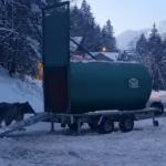 Ursul care a speriat turiștii aflați la schi, în Predeal, a fost prins   VIDEO