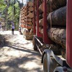 Sub 1% dintre transporturile de lemn sunt verificate la ieșirea din pădure – WWF România