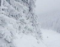 Cod Galben de ninsori în zona Carpaților Meridionali, Orientali și în Munții Apuseni