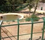 24 de maimuțe au fugit dintr-o grădină zoologică din Germania