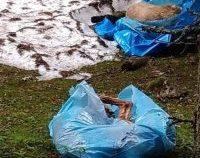 Mai mulți câini morți, în saci de plastic, descoperiți într-o zonă turistică din Hunedoara
