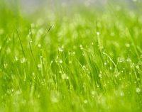 Dobrogea: La începutul lunii iunie, temperaturile vor crește ușor