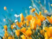 Dobrogea: Temperaturile vor fi în creștere