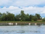 Campanie de conștientizare a turiștilor ce vin în Delta Dunării: Nu fi PETlican | AUDIO