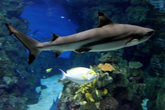 Aquarium 09