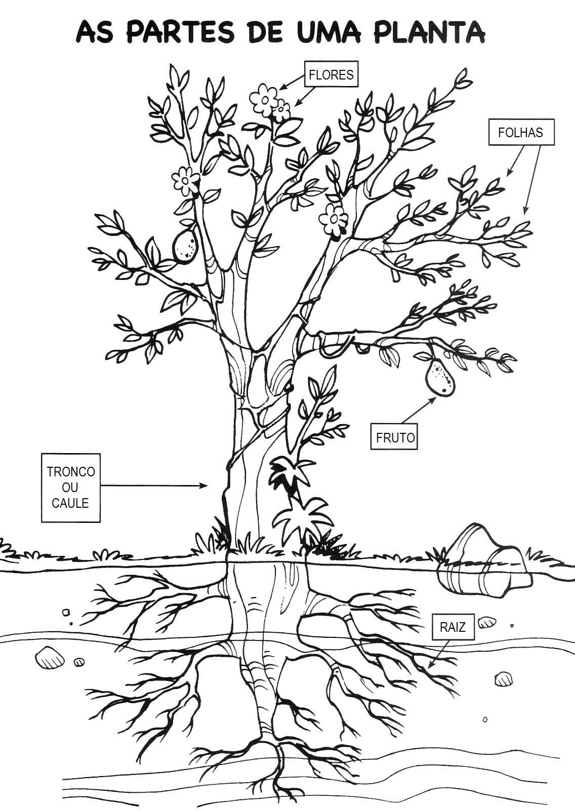 imagens de diferentes tipos de raizes para colorir