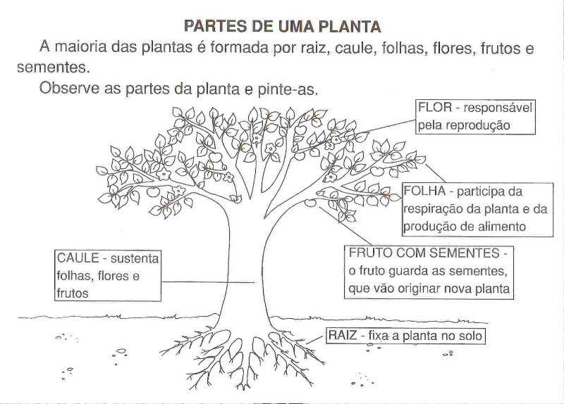 Muito ATIVIDADES SOBRE AS PARTES DAS PLANTAS JZ72