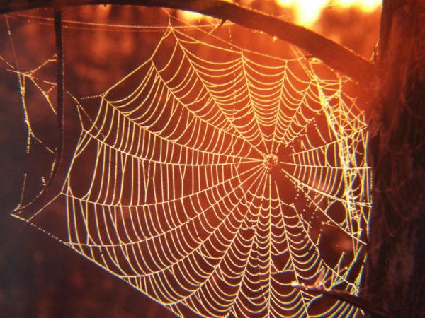Spider Web 3-min