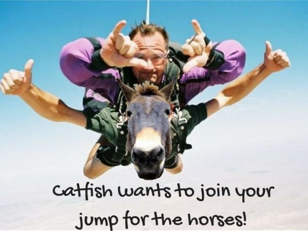 catfish_wants_to_jump_for_the_horses
