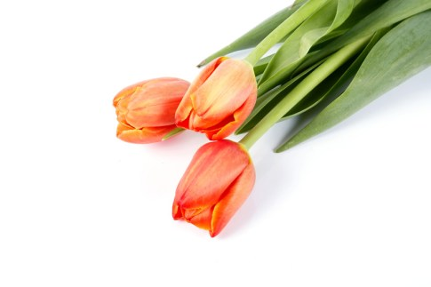 """""""I love the fluid shape of tulips! For a beautiful spring arrangement, simply use all one color and en masse. For anyone florally challenged, this is a cinch."""" """"Chad Holman"""