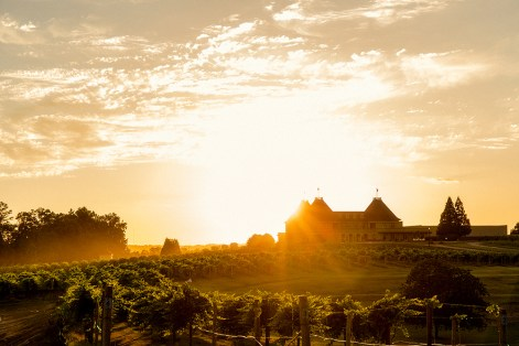 Golden hour at the winery.