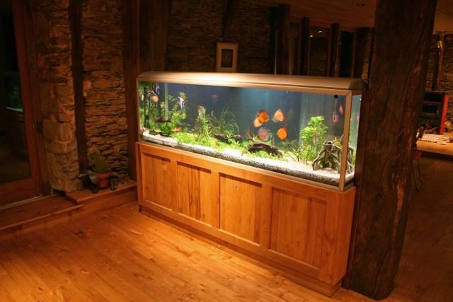 fish tank during the night