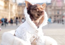 While not every dog needs a coat, some breeds appreciate donning an extra layer when the temperature drops. Coat by Mister Migs