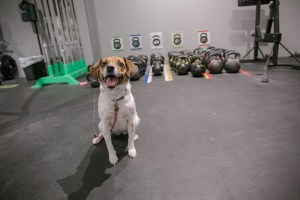 After all the indulgence of the holiday season, hit the gym with your pup at CrossFit 404.