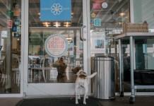 Buckhead's Karma Daisy welcomes pups on the patio year-round.