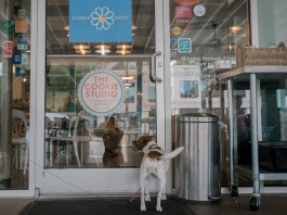 Buckhead's Karma Daisy welcomes pups on the patio year-round.