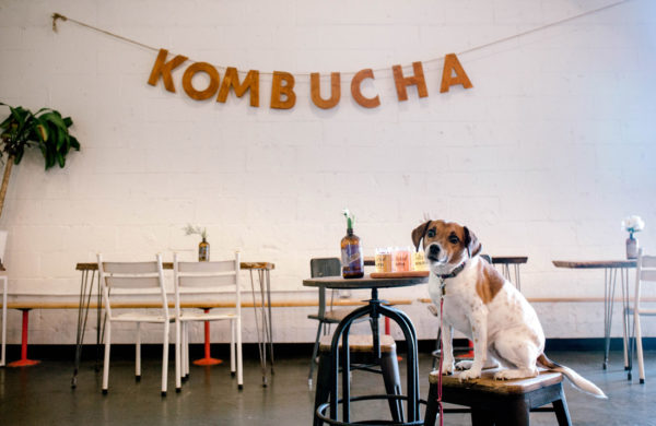 Dogs are welcome inside and out at Cultured South's kombucha tasting room.