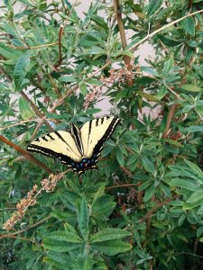 Butterfly in garden