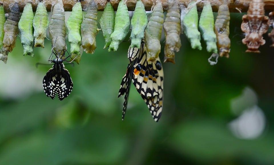 Metamorfoza inversă a Bucureștiului: de la fluture la larvă