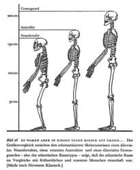 Abb. 2 Der Größenvergleich zwischen den schematisierten Skelettumrissen eines diluvialen Neandertalers, eines rezenten Australiers und eines diluvialen Cromagnarden nach Hermann Klaatsch.