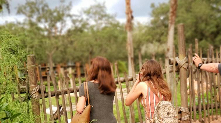 savannah viewing at disney animal kingdom lodge
