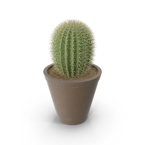 Cactus PNG Images Amp PSDs For Download PixelSquid