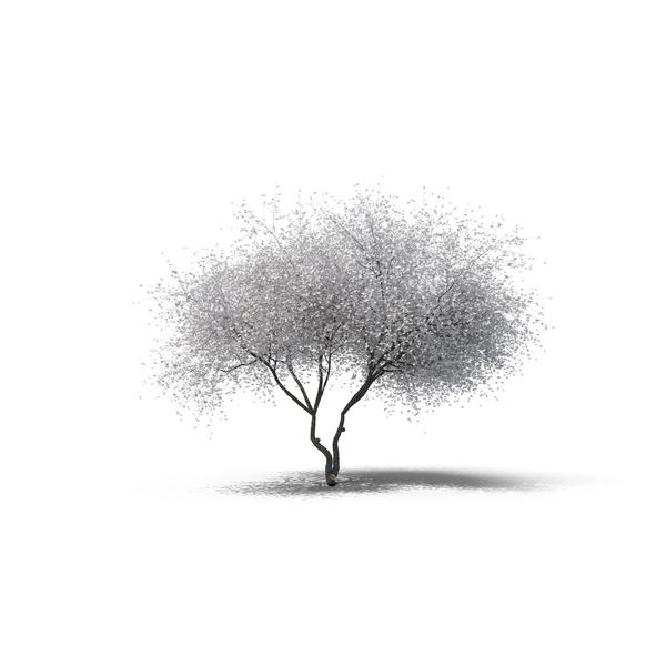 Decidious Tree PNG Images Amp PSDs For Download PixelSquid
