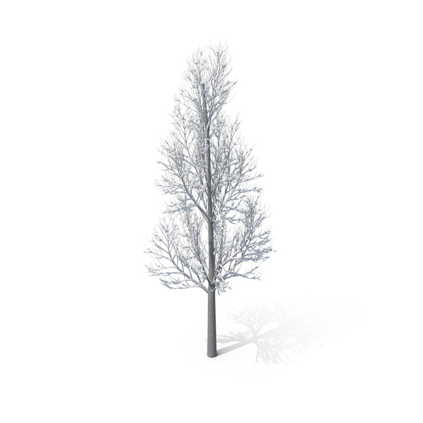 Winter Tree PNG Images Amp PSDs For Download PixelSquid