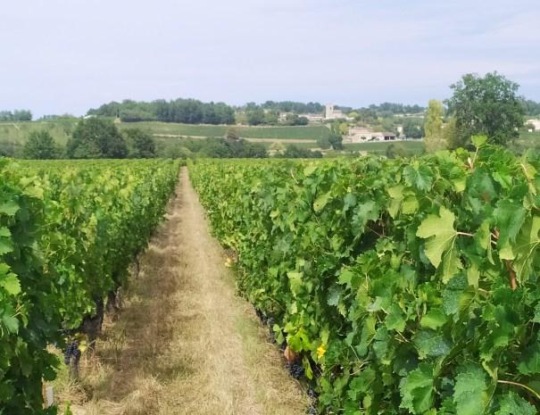best-wine-tours-in-bordeaux