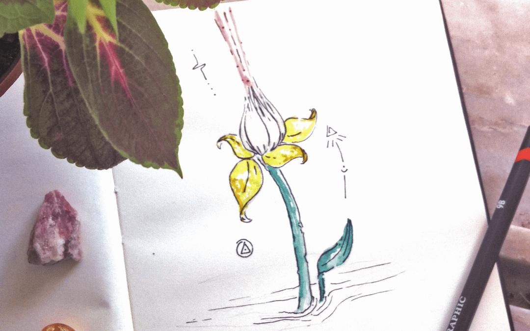 O meu olhar sobre a sagrada flor de lótus
