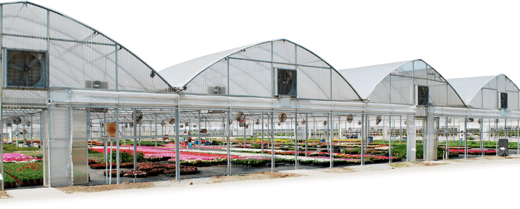 Greenhouses For Commercial Educational Hobby Atlas Manufacturing